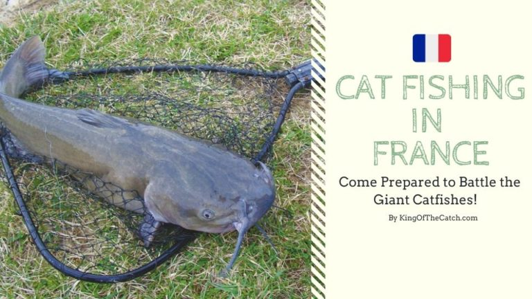 cat fishing france