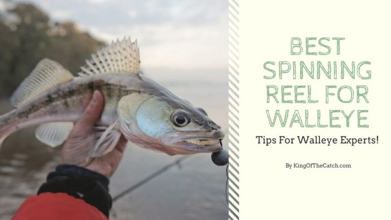 spinning reels for walleye
