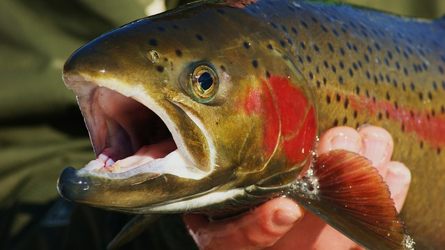 Best Trout Lures for Ponds