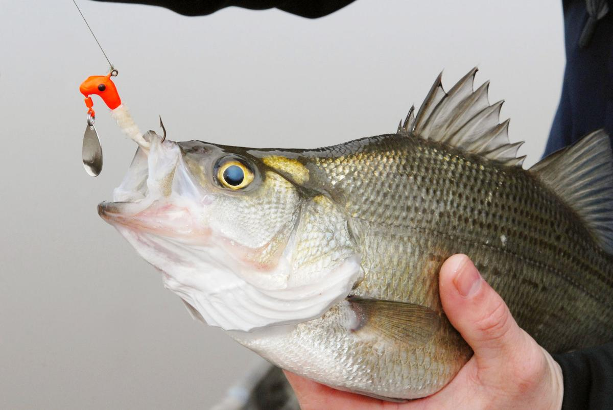 best lures for white bass fishing