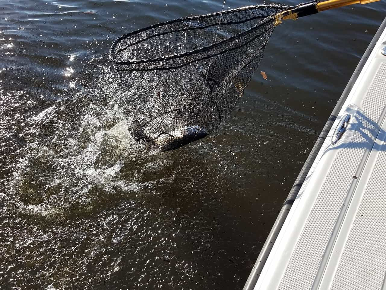 Best Soft Plastics For Speckled Trout