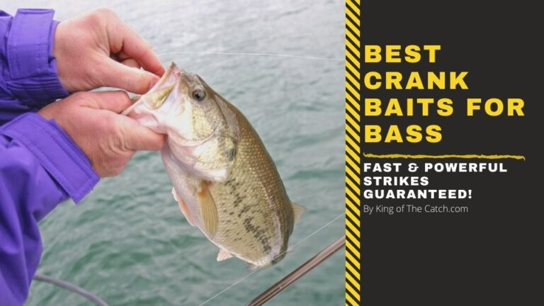 best crankbaits for bass