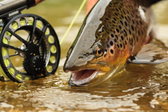 Do You Fish Upstream Or Downstream For Trout